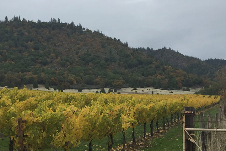 View of Layne Vineyard