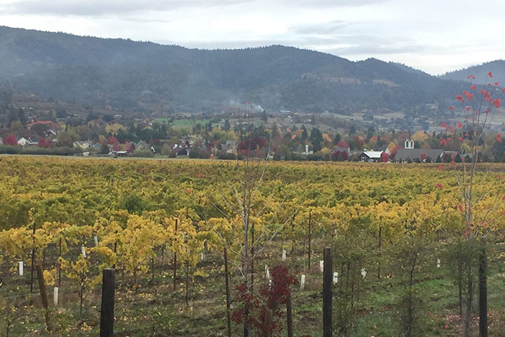 View of Deboer Vineyard