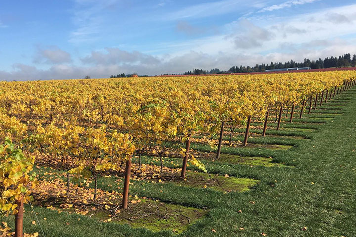 View of Nursery Road Vineyard