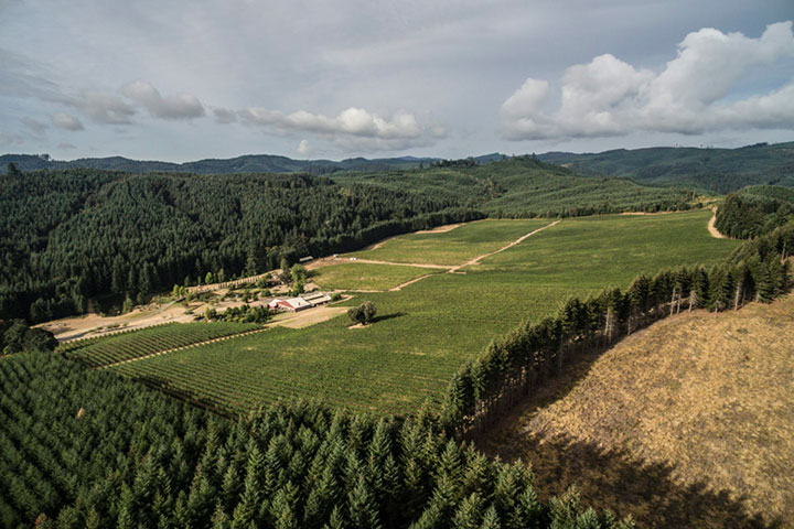 View of Pfeiffer Vineyard