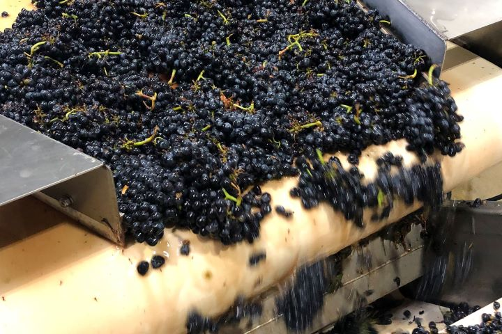 Grapes in the Crusher