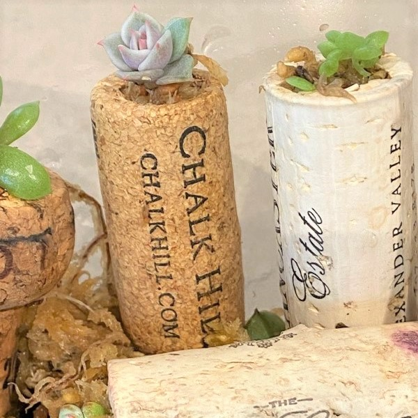Succulents Planted in Used Corks