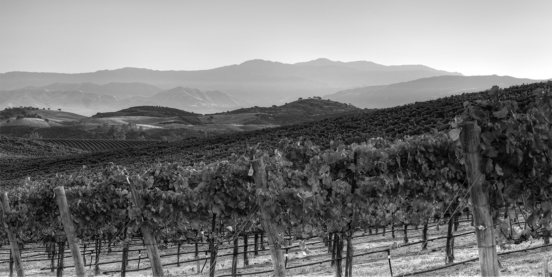 Black and White Photo Vineyards and Mountains in the distance.