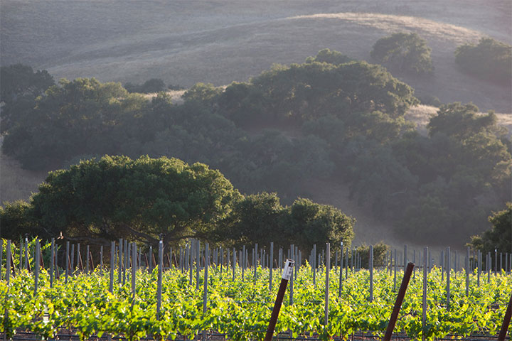 Verdent Vineyards