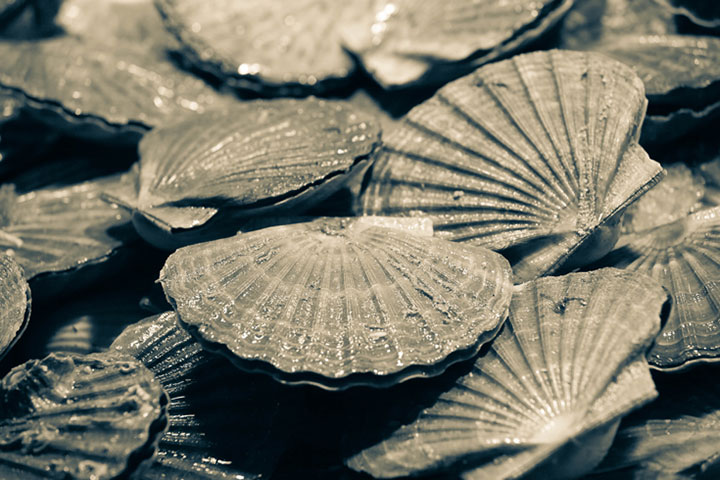 Black and White Image of Many Seashells