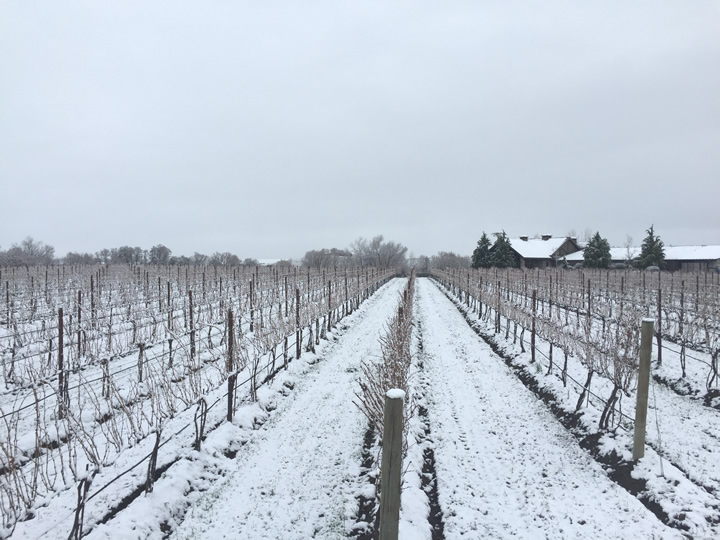 Dormant Walla Walla Vineyard with Snow