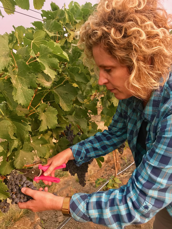 Winemaker Holly Turner Sampling Wine Grapes