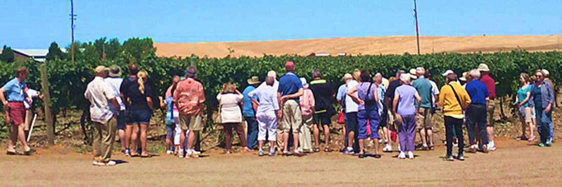 A Tour Group Visiting the Vineyard