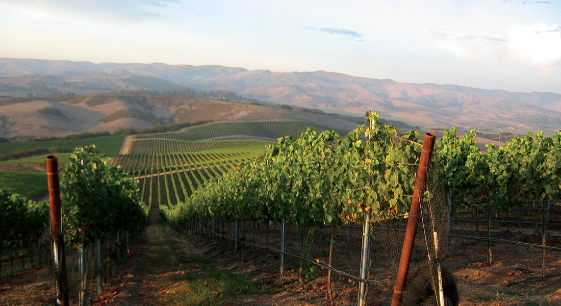 Vineyards at Foley Estates