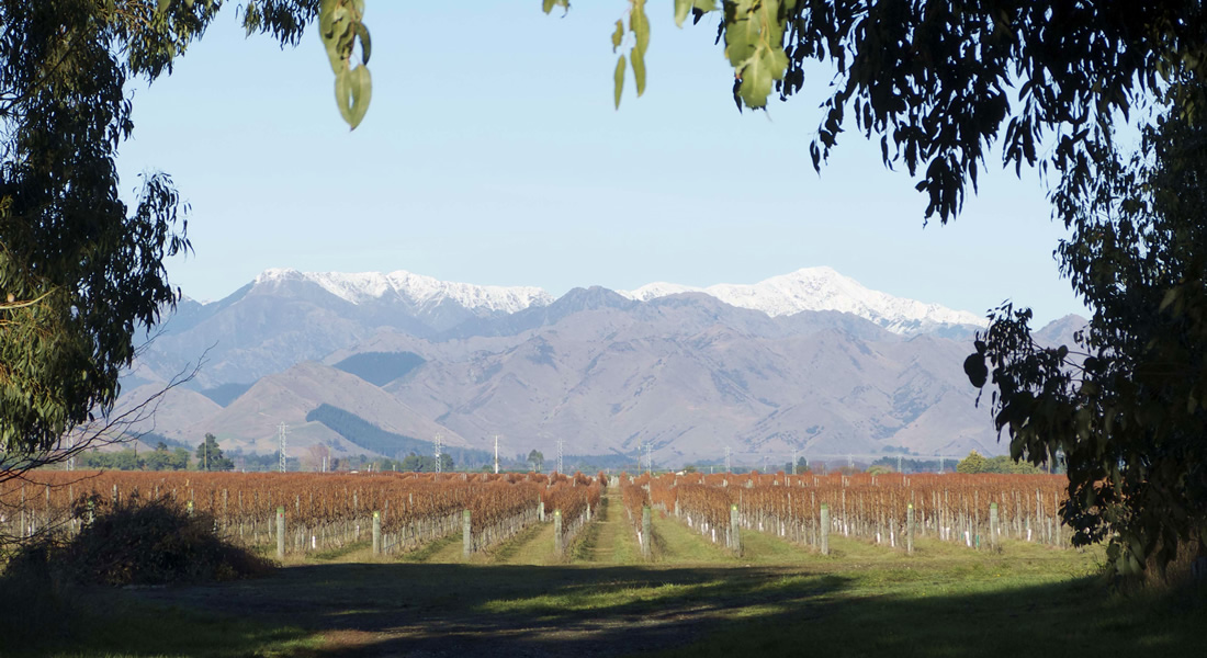 Grove Mill Home Wine Vineyard with Mountains