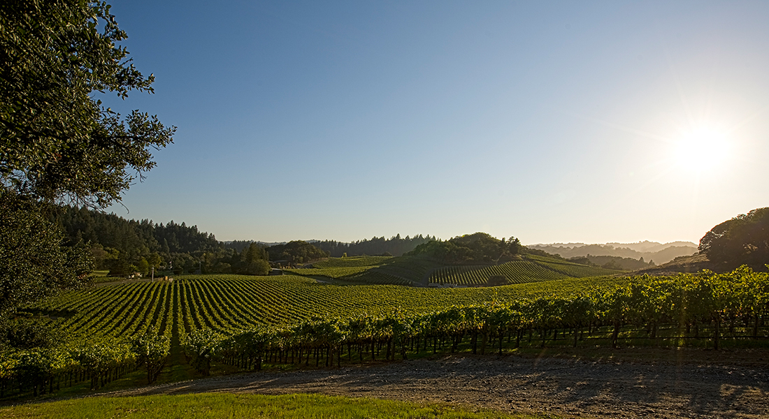 The Lancaster Estate Vineyards