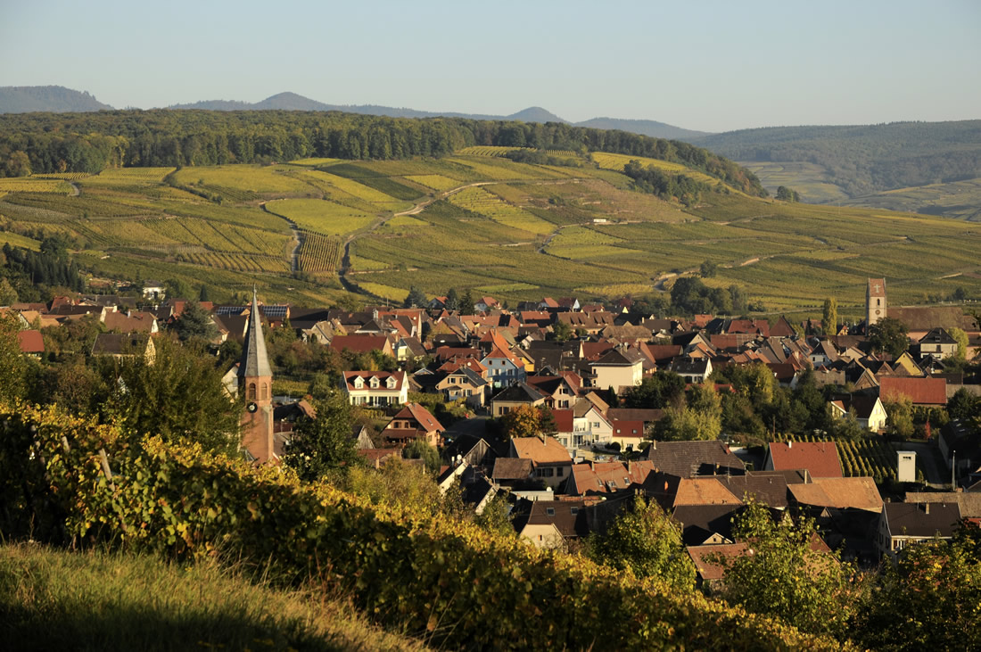 Pfingstberg Vineyard in Alsace