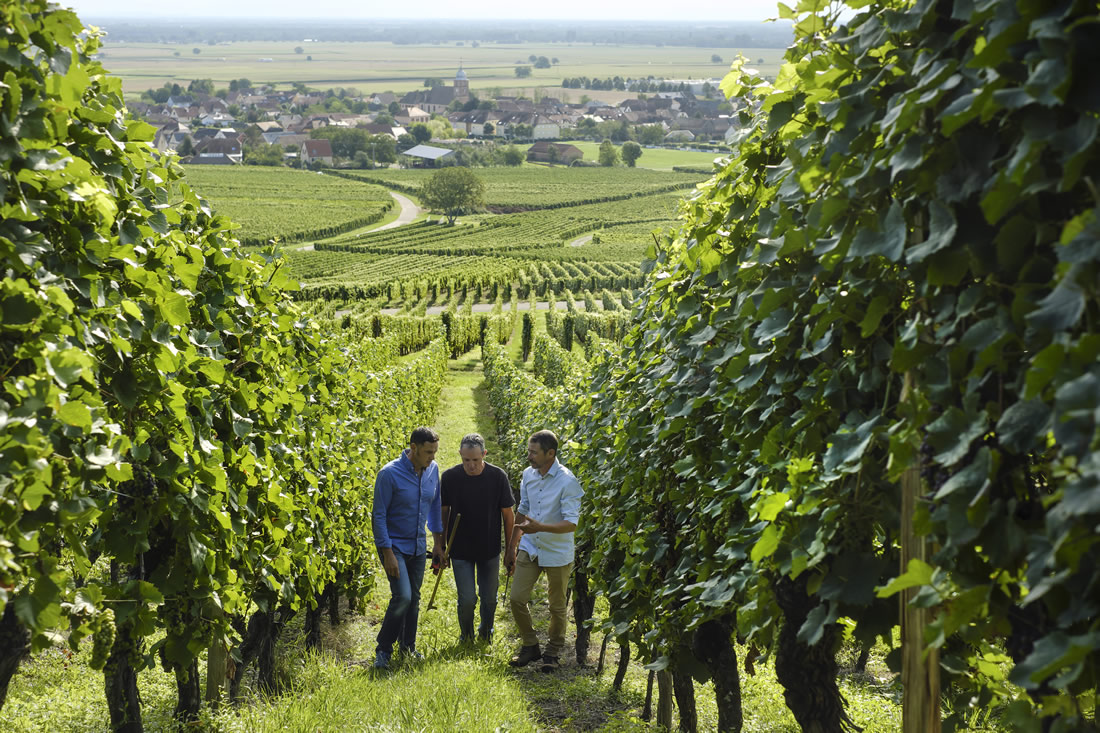 Lucien Albrecht Winemakers in the Vineyard