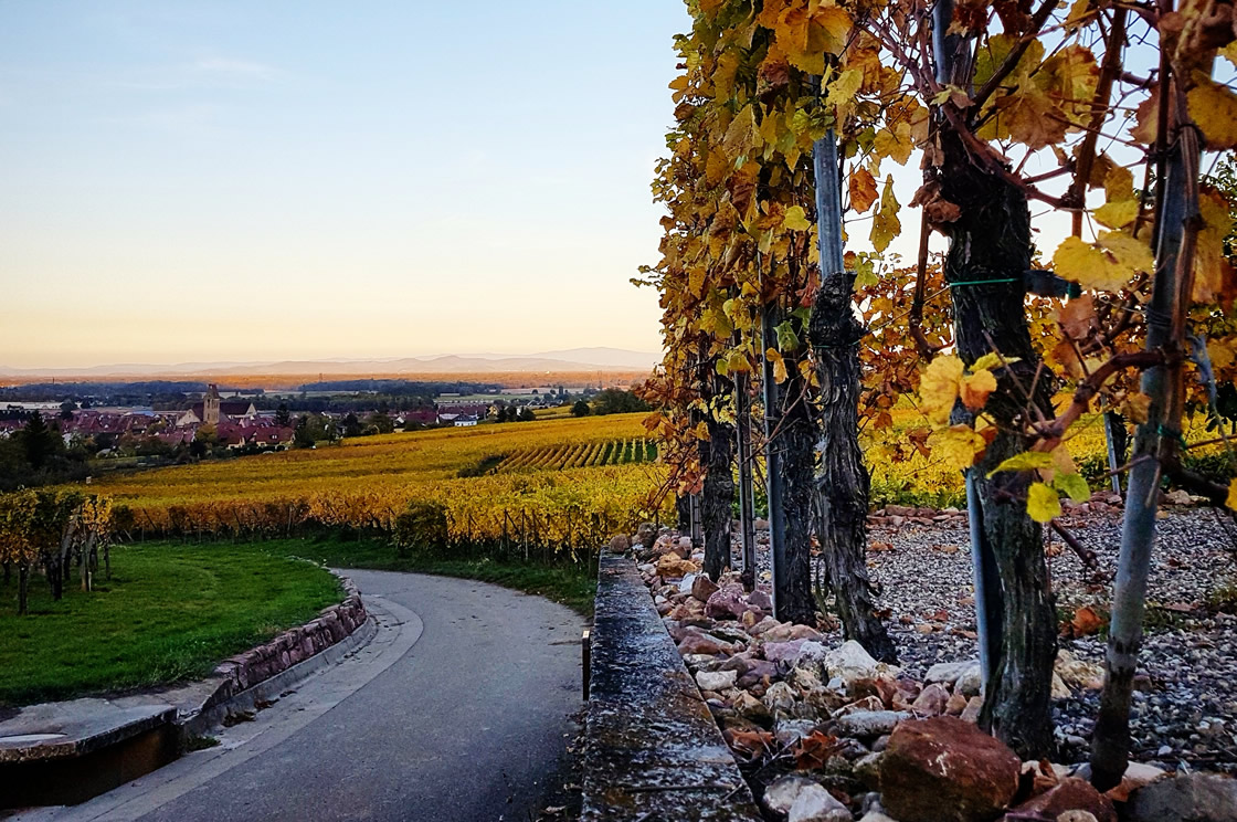 French Wine Vineyards in Autumn