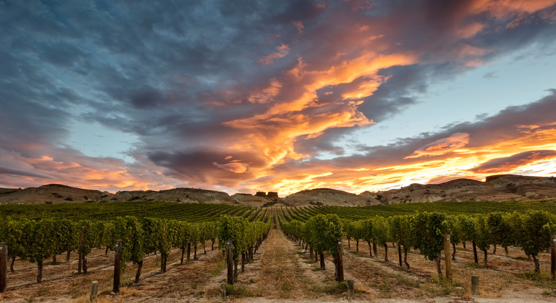 Sunrise over New Zealand Vineyards