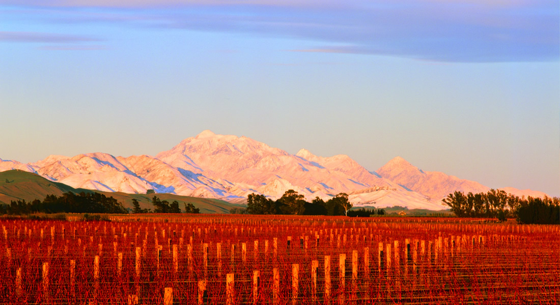 Vavasour Vineyards in Awatere Valley