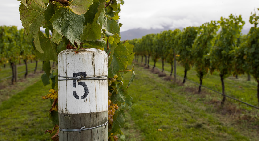 Vineyard Tag showing Block 5